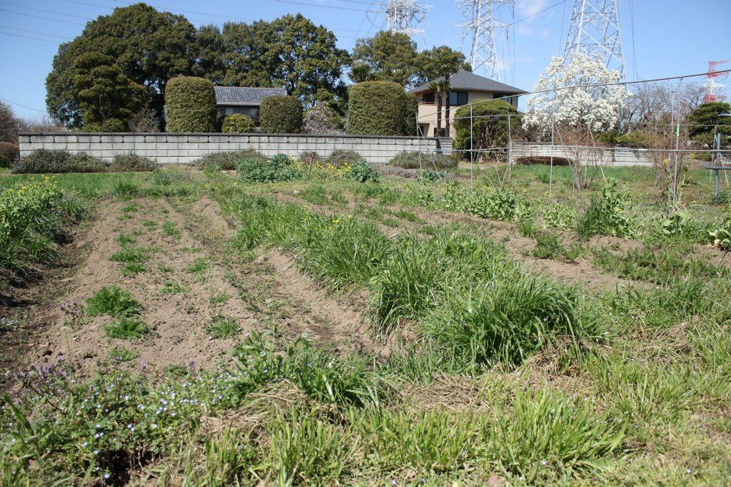 """ファーム&ガーデン白岡。農心連携のサラダを食べて、""""土といのち""""に触れる"""