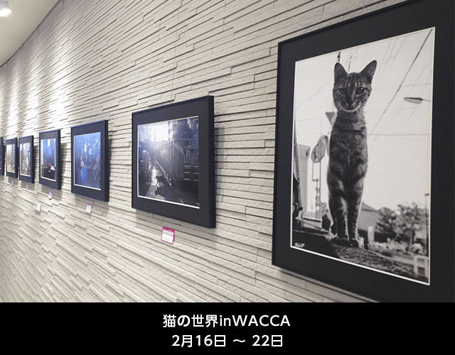 猫の世界 in WACCA 2015 〜All Cat Love〜