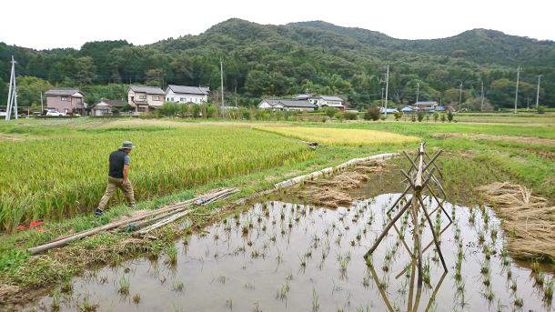 米米プロジェクトの田んぼ