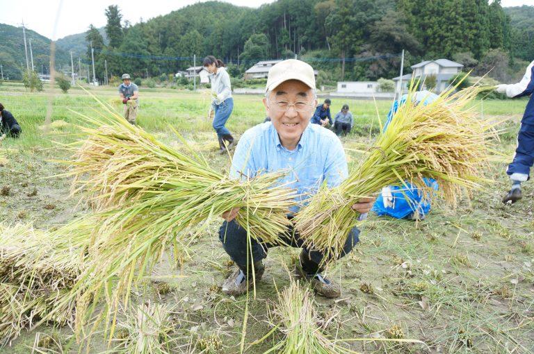米米プロジェクトの稲の収穫