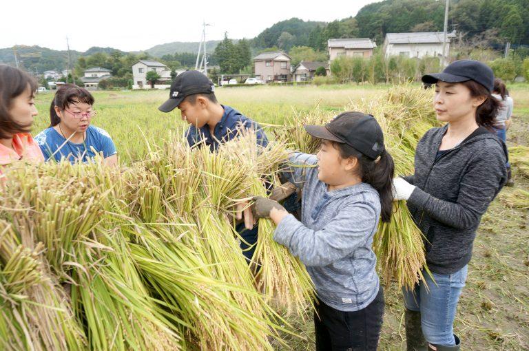 稲木で稲を干す米米プロジェクト参加者さん